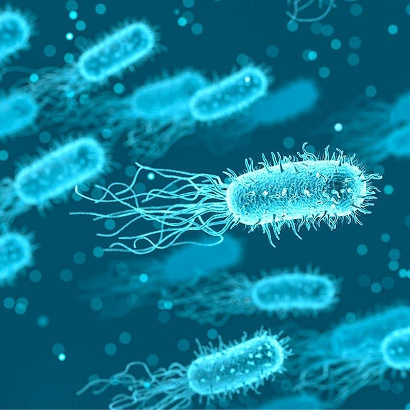 Tarmbakterier får näring av arabinogalaktan